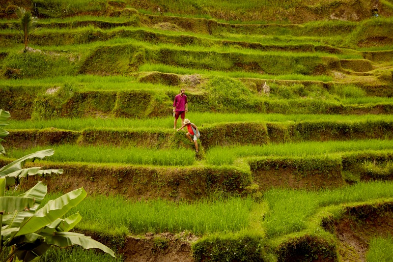 AAA___Guests_at_rice_terrace-0123_Large