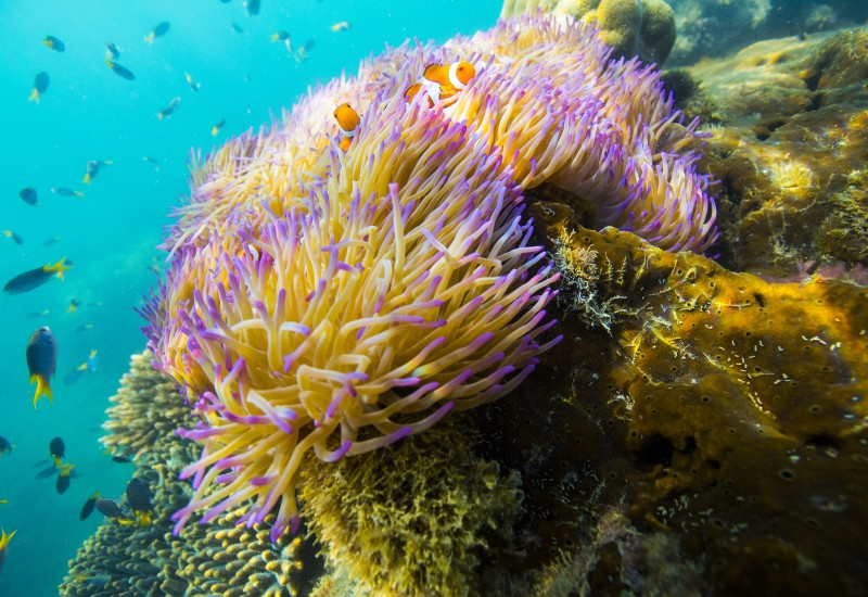 Airbnb Great Barrier Reef coral nemo