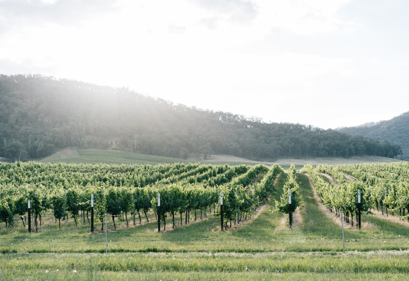 Airbnb: King Valley, Victoria, Destination Guide